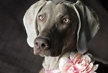 Animal - Portraits / by Miss Guylaine Martel