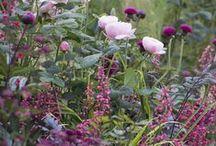 Romantisk drömträdgård