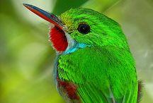 Birding Bliss