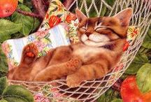 Cat Images for cards