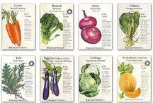 Garden Veggies / by anou design