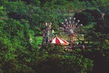 Le Cirque des Rêves  / The Night Circus / by Sarah Street