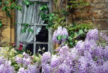 lavender / by Robin Ramsey