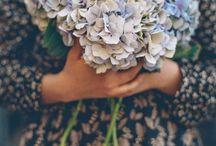 : fleur : / pretty flowers & plants
