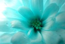 Color: Turquoise Treasures / by Laura Hoekstra