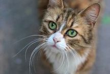 Cats. Kitties. Kitties. Cats.