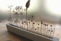 : seeds + pods : / pattern inspiration