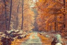 Fall Travel Ideas / Fall travel ideas including weekend getaways, fall foliage drives, football season and more.  / by MapQuest