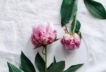 bloom / flowers / by Gidel Dawson