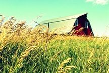 The Essence of the Midwest / We love the beautiful scenery and culture that is the Midwest!