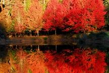 fall for autumn / #fall #autumn