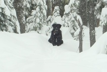 Winter Fun at Mt Hood, Oregon / There are lots of fun things to do around Mt Hood in the winter.