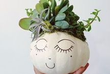 Pumpkin Decorating / Ideas to decorate your pumpkin this fall!