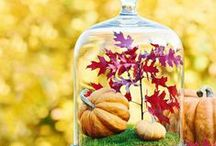Fall Decorating, Contained! / Container Style Decorating Ideas