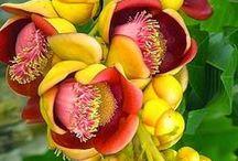FLOWERS/BIG MAC