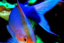 fish tanks/BIG MAC
