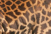 Animal Prints / by Alicia