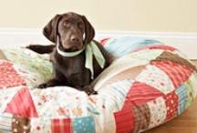 DIY Dog Projetcs / by HappyBigDog .com