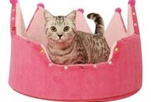 Gatos - Cats / Diferentes tipos de casas para gatos. Una para cada necesidad: las tuyas y las de tu gato. / by Mary Angel Dávila