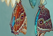 Butterflies~ / by Chesparrow ~