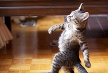 Cats: Fun and Funny  / by Alicia