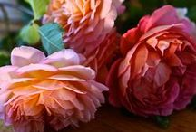 Gardening ✿ Roses / My ♥ for Roses