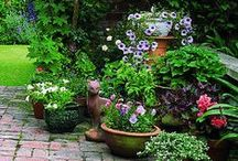 Gardening ✿ Pots on the Patio / Gardening in Pots, Containers and so on... Also Potting Benches and Potting Sheds