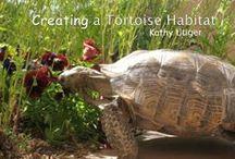Gardening ✿ Tortoise Paradise / Inspiration for my Tortoises in the Garden