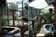 Gardening ✿ Cats Enclosure / Inspiration for our #Cat Enclosure