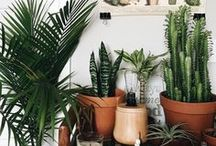 House of plants & growing tips
