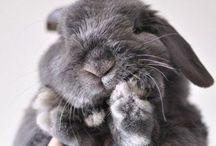 animal cuties.
