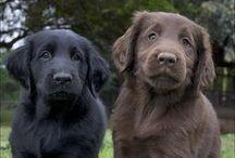 Pups  / by Melissa Reeder Dunsmoor