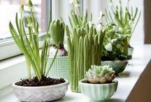 Green Stuff / by Erika Noel