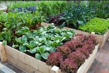 Vege Patch / A little bit of vege garden inspiration and some very clever tips about how to get the best out of your vege patch.