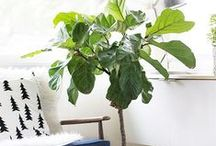 Plants & Flowers for Indoors / Gorgeous plants and flowers for inside your home, perfect for the 'green thumb'