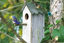 Birdhouses / by Florence Gray
