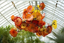 Dale Chihuly / Dale Chihuly (born September 20, 1941) is an American glass sculptor and entrepreneur. / by Florence Gray