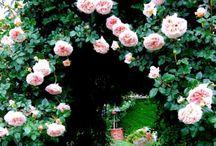 Gardens / by Andrea Hoag