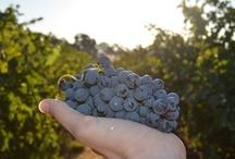 Woodbridge Harvest 2012