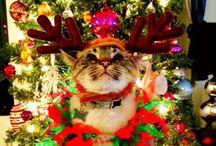 Christmas!!! / by Kym Wheeler