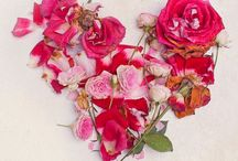 Valentine's Day ❤️ / by Kym Wheeler