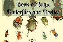 Natural History, Zoology, Nature Study {homeschool} / by Kari
