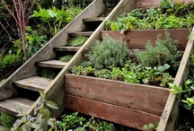 Gardening (ideas & fun)