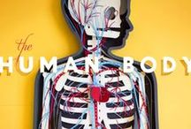 Human Body Videos {homeschool} / by Kari