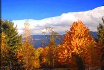 Fall / by Caro Lancaster