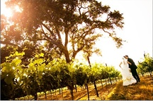 Vintage Vineyard {Romance}