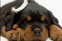 DOG'S  I LOVE ALL DOG'S  / by Clyta Norton