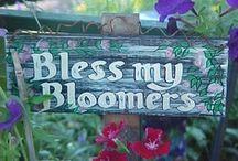 FLOWER PICS / by Clyta Norton