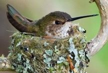 Hummingbird stuff / My love of hummingbirds.