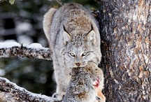 Animals / by Meg Li